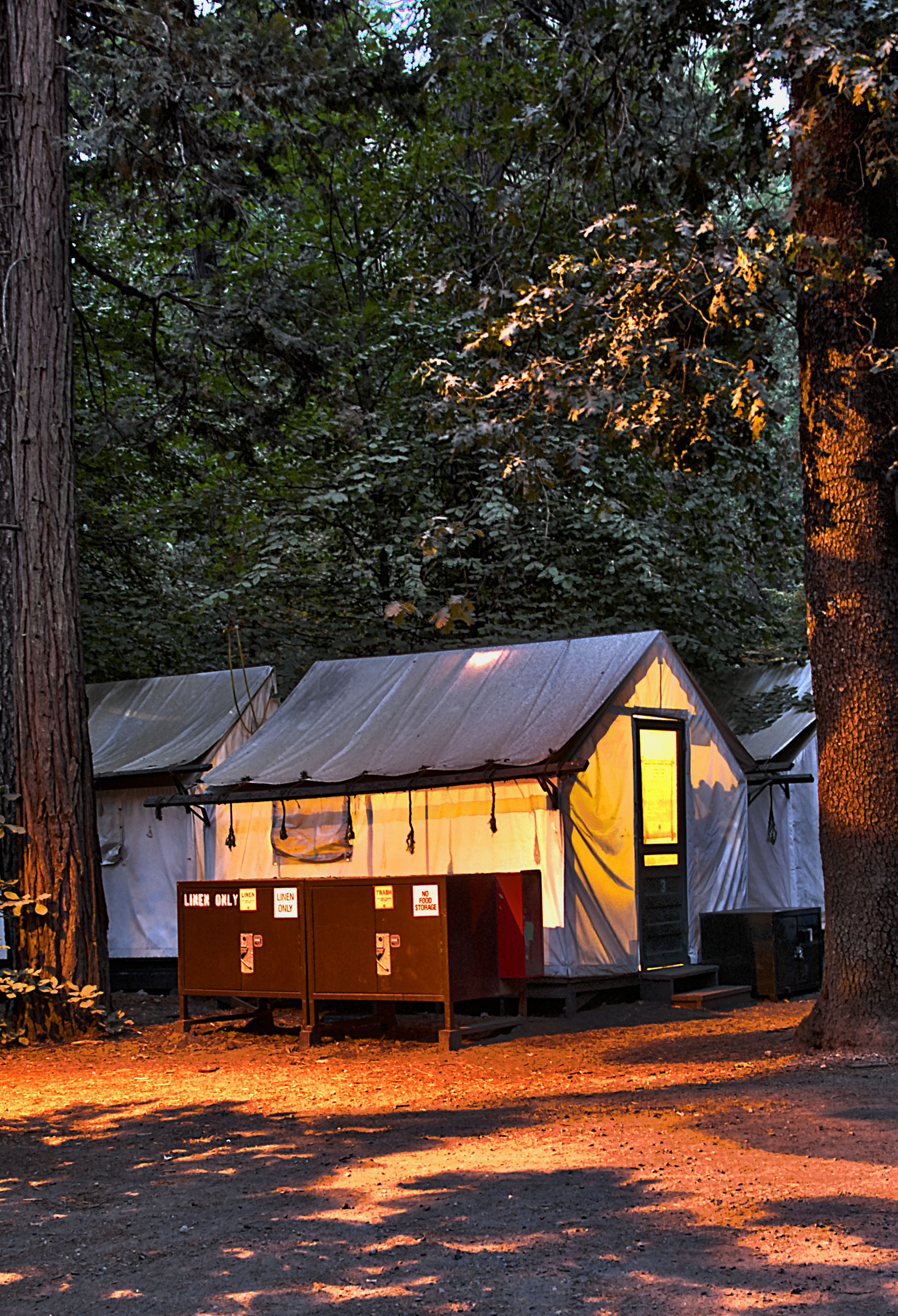 "Our Curry Village tent cabin--just the ""bear"" necessities!"