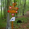 Oh, the places you'll go! I snapped this signpost midway through a 40K trail run in Tuscany on my 41st birthday.
