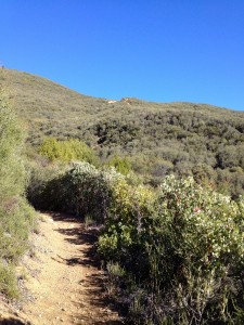 The final stretch up Gridley to the ridge.