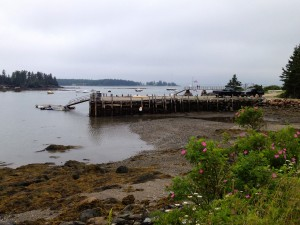 Sylvester Cove midway through a 10K run on Deer Isle.