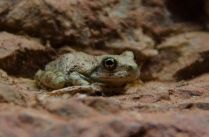 We had close encounters with many little frogs.