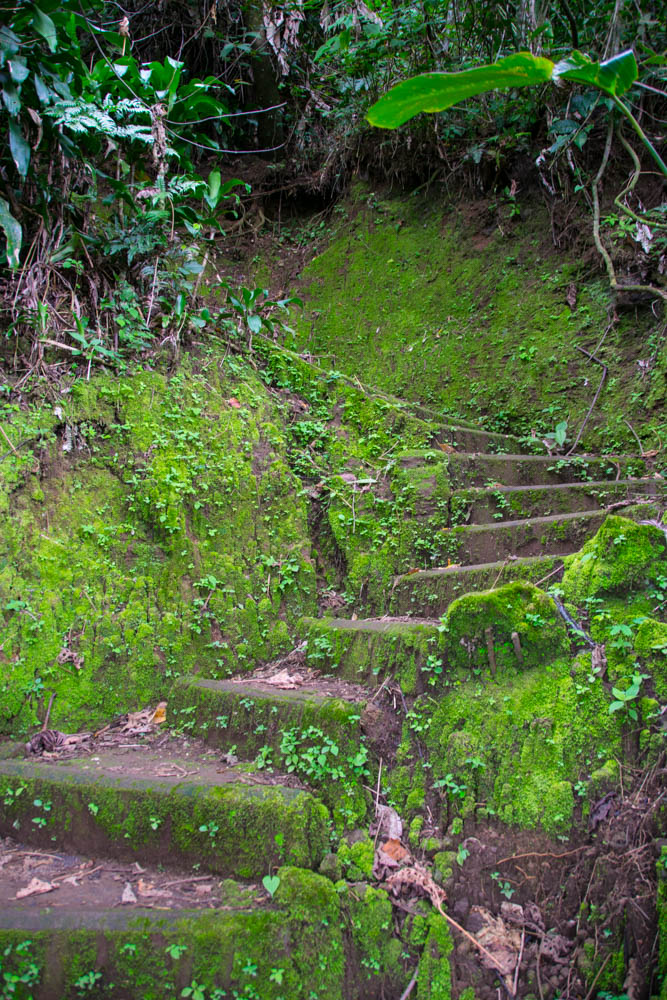 The trail around Xandari had hundred of steps like these.