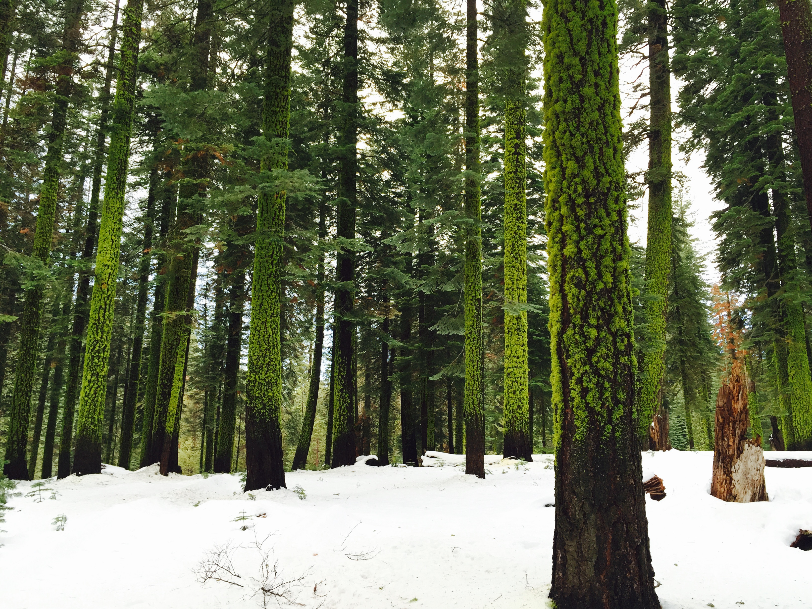 This is how the valley's forests looked to us this week, as we visited around Winter Solstice.